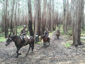 Group of people on horseback riding through tall trees