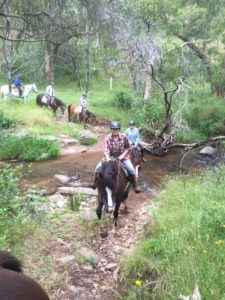 Five people on horseback riding down through a creek crossing with surrounding trees