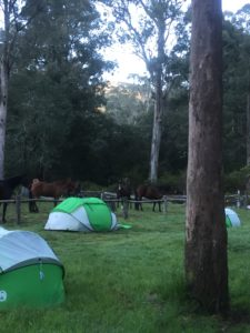 Camping tents set up in front of horse paddock with horses feeding in background