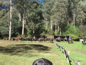 Horses coming into our mustering hut to camp