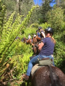 group of ladies looking back at camera on horseback riding through tree fern-ed track