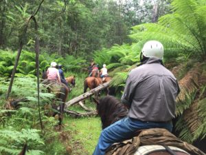 a group of people riding horses through a fern tree track