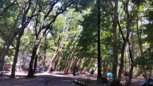 camp under the elm trees