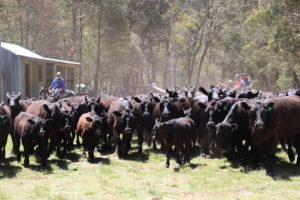 Cattle Muster 2018 @ King Hut